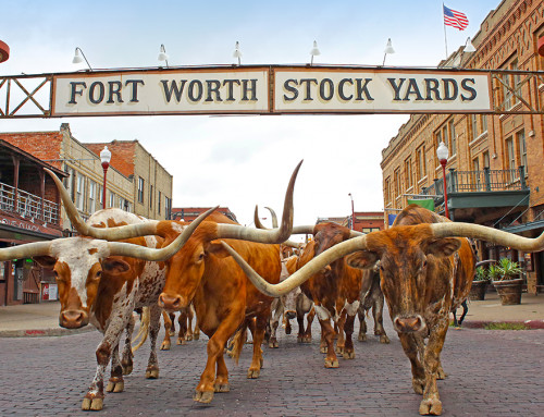 48 Hours in Fort Worth: The Must-Stop Spots for a Weekend trip to Cowtown